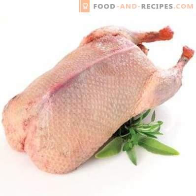 Carne de rață: avantaj și rău