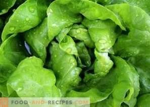 Cum se îngheață frunzele de salată de iarnă
