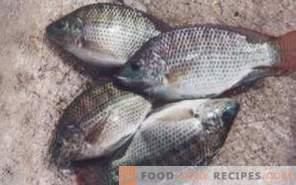 Tilapia de pește: beneficiu și rău