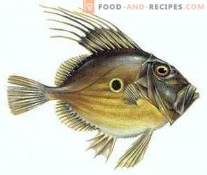 Дори Риба: Придобивки и штети