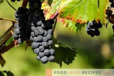 Chach van druiven